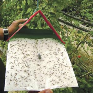 Traps & Monitoring
