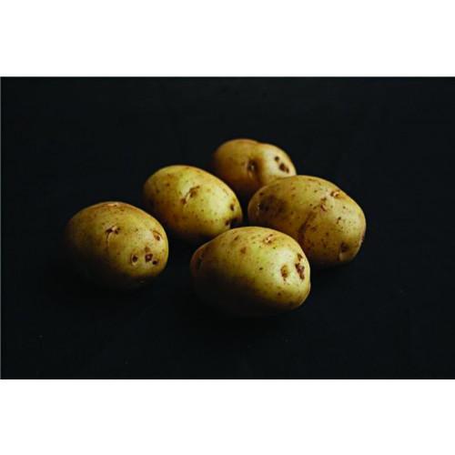 British Queen Seed Potato - Second Earlies