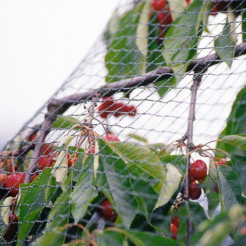 Standard Anti-Bird Net [PN3]