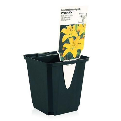 Teku Series MQC Square Pot 11x11x12cm (1L) - 378/Box