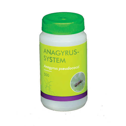 Anagyrus-System - 500