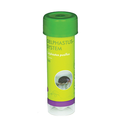 Delphastus-System - 100