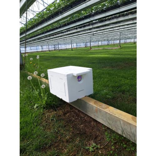 Bee-Coat (Single Outdoor Hive- V2)