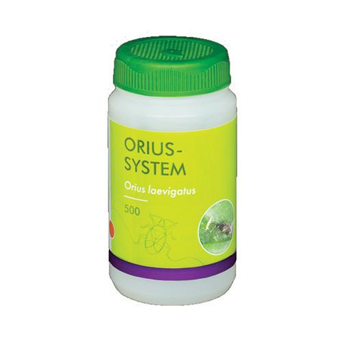 Orius-System (Orius leavigatus)